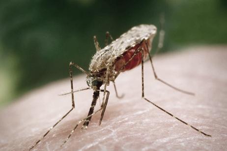 Afrique : Un vaccin contre le paludisme efficace lors d'essais cliniques